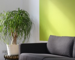 Greenery Painted Wall