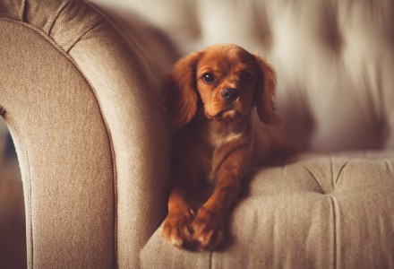 Cute puppy sitting on sofa