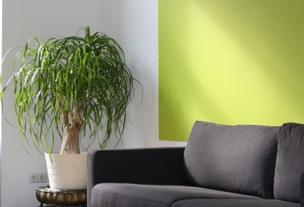 Yellowy green painted wall