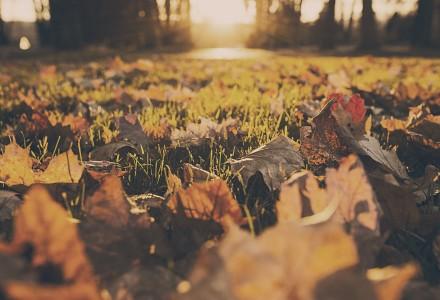 grass-leaves-autumn