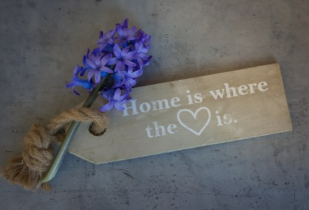 hyacinth-flowers-home