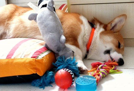 dog - toys - sleeping