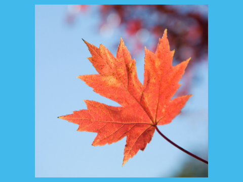 take inspiration from the colours of autumn for your home decor