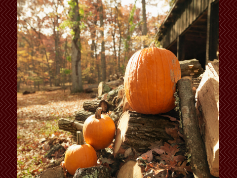 try growing pumpkins to decorate your house for autumn
