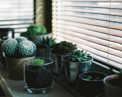 Brighten up a loft conversion guest room with house plants like cacti
