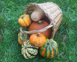 Pumpkins and squashes make great Halloween decorations